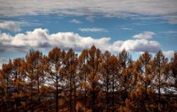 Төв Азийн уур амьсгал өөрчлөгдсөнийг Монголын шинэс нотолжээ