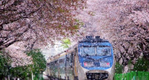 Солонгост амрахаар төлөвлөсөн хүмүүст санал болгох үзэсгэлэнт байгальтай 25 газар