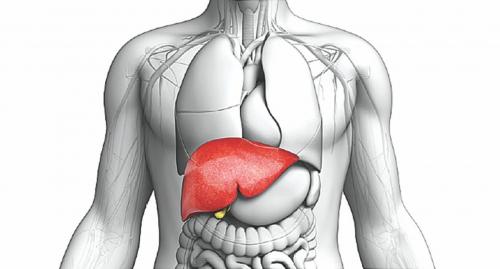Гепатит А, В, C-ийн тухай болон хэрхэн халдвараас зайлсхийх тухай